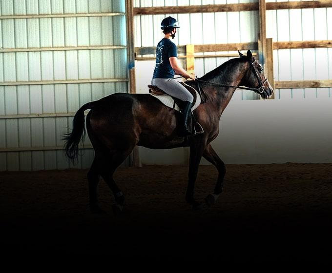 equestrian-3